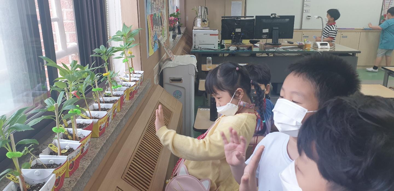 [일반] 1학년 생명존중교육(봉숭아 씨앗 심고 가꾸기) 4.19(월)~의 첨부이미지 6