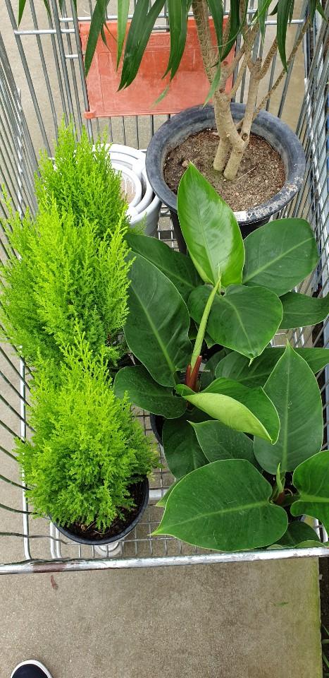 [일반] (과동EGG)푸른하늘 지키미 공기 정화 식물 화분 기르기 활동 (7/24)의 첨부이미지 2