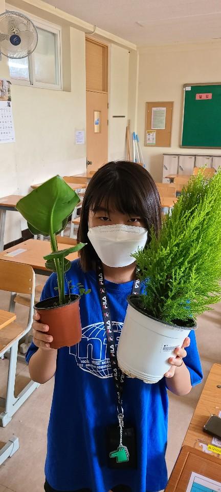[일반] (과동EGG)푸른하늘 지키미 공기 정화 식물 화분 기르기 활동 (7/24)의 첨부이미지 3