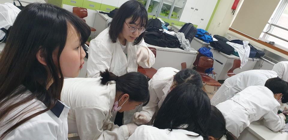 [일반] (과학과)과학동아리 개구리 해부 실험의 첨부이미지 2
