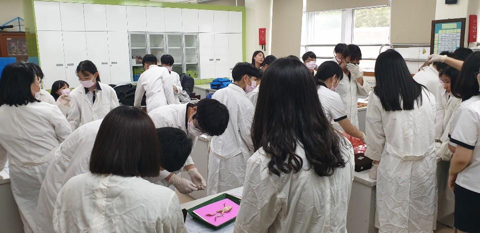 [일반] (과학과)과학동아리 개구리 해부 실험의 첨부이미지 5